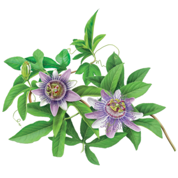 Passionflower Herbal Supplement