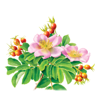 Rose Hips Herbal Supplement